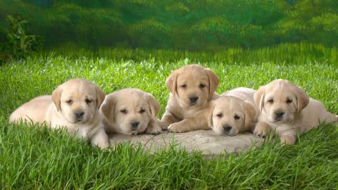 10 Awesome Dog Facts