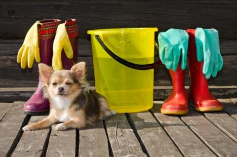 6 Tips To Help Keep A Clean House With A Dog
