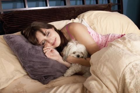 Why Does Your Dog Want To Snuggle Up With You?