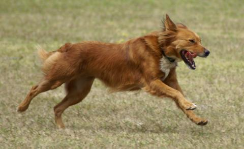 Tips To Help Prevent Your Dogs From Running Away