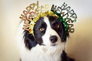 Your Dog's New Year's Resolutions