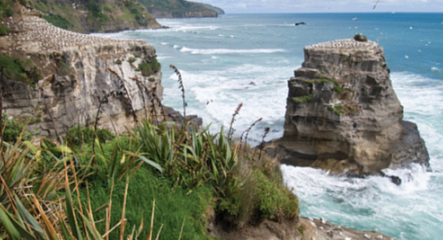 Our Favourite Auckland Walking Spots