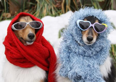 Easy Ways To Keep Your Dog Warm Over Winter
