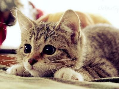 10 Fun Facts You May Not Know About Cats