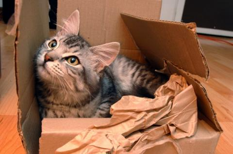 Why Do Cats Like Cardboard Boxes?